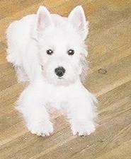 Rex as a puppy